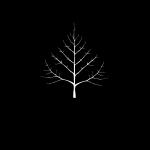 cottonwood logo 400px400px_TRANSP-01